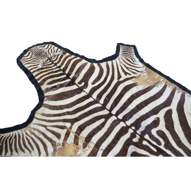 Authentic zebra rug