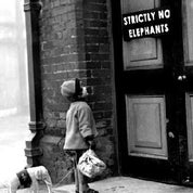 Image of Strictly No Elephants