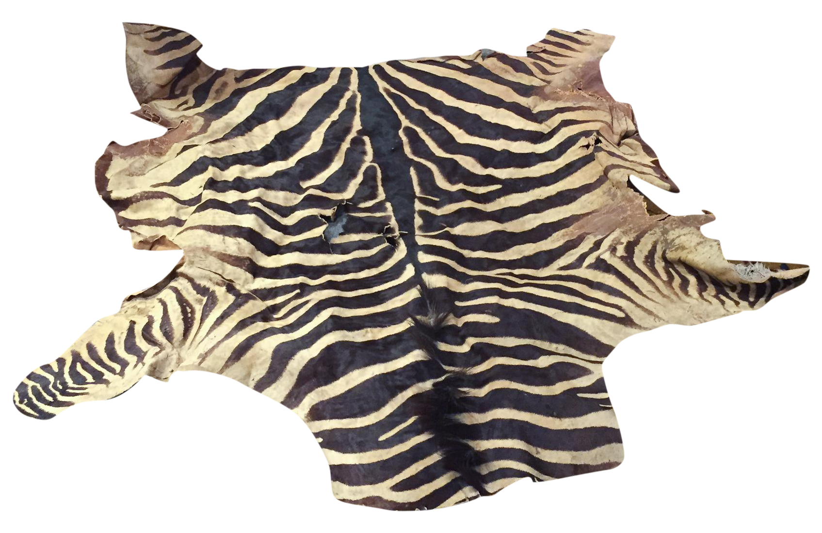 Zebra Hide Rug Ebay Furniture Shop