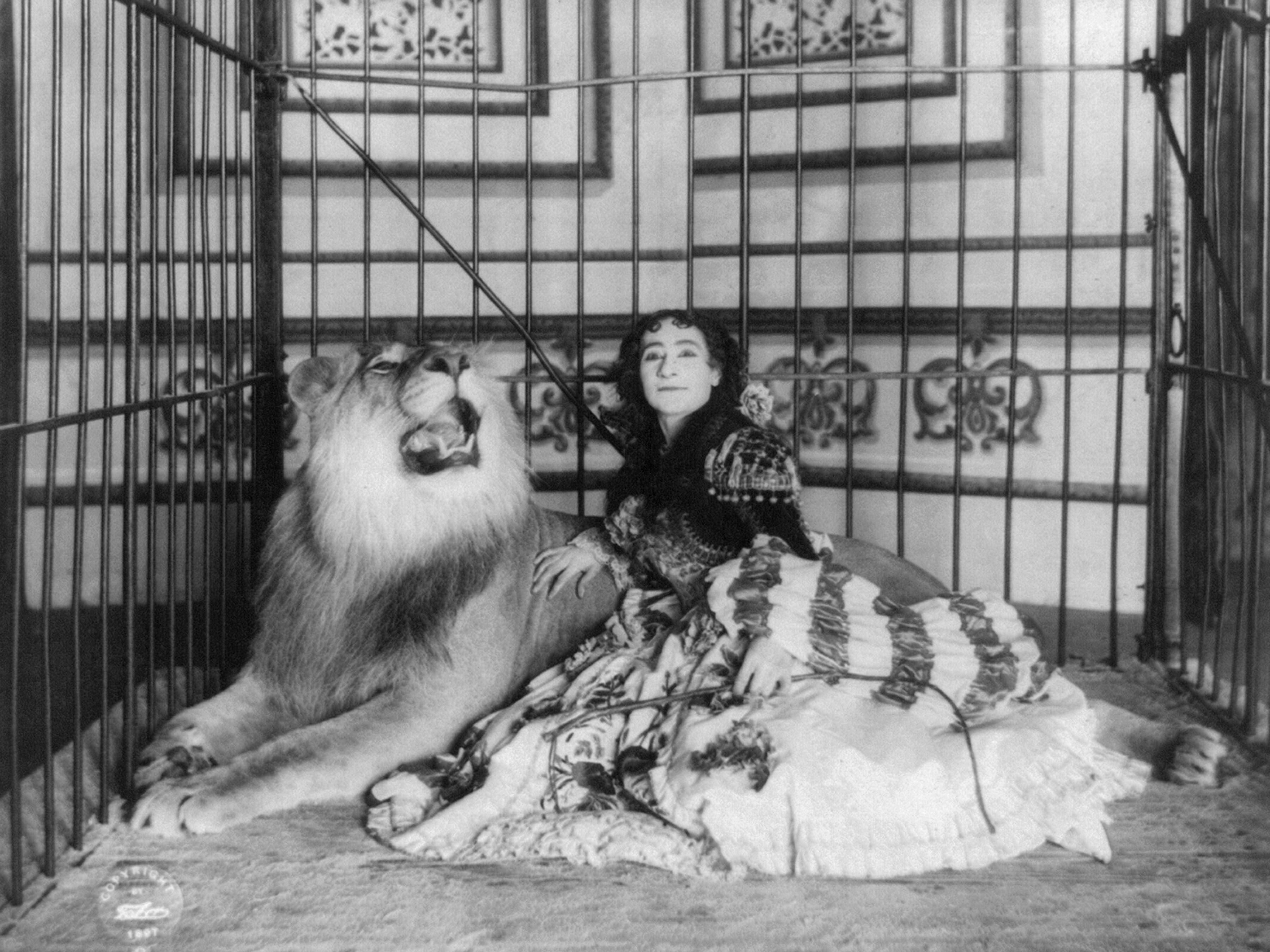 Early 20th C True Lion Tamer Circus Photography Chairish