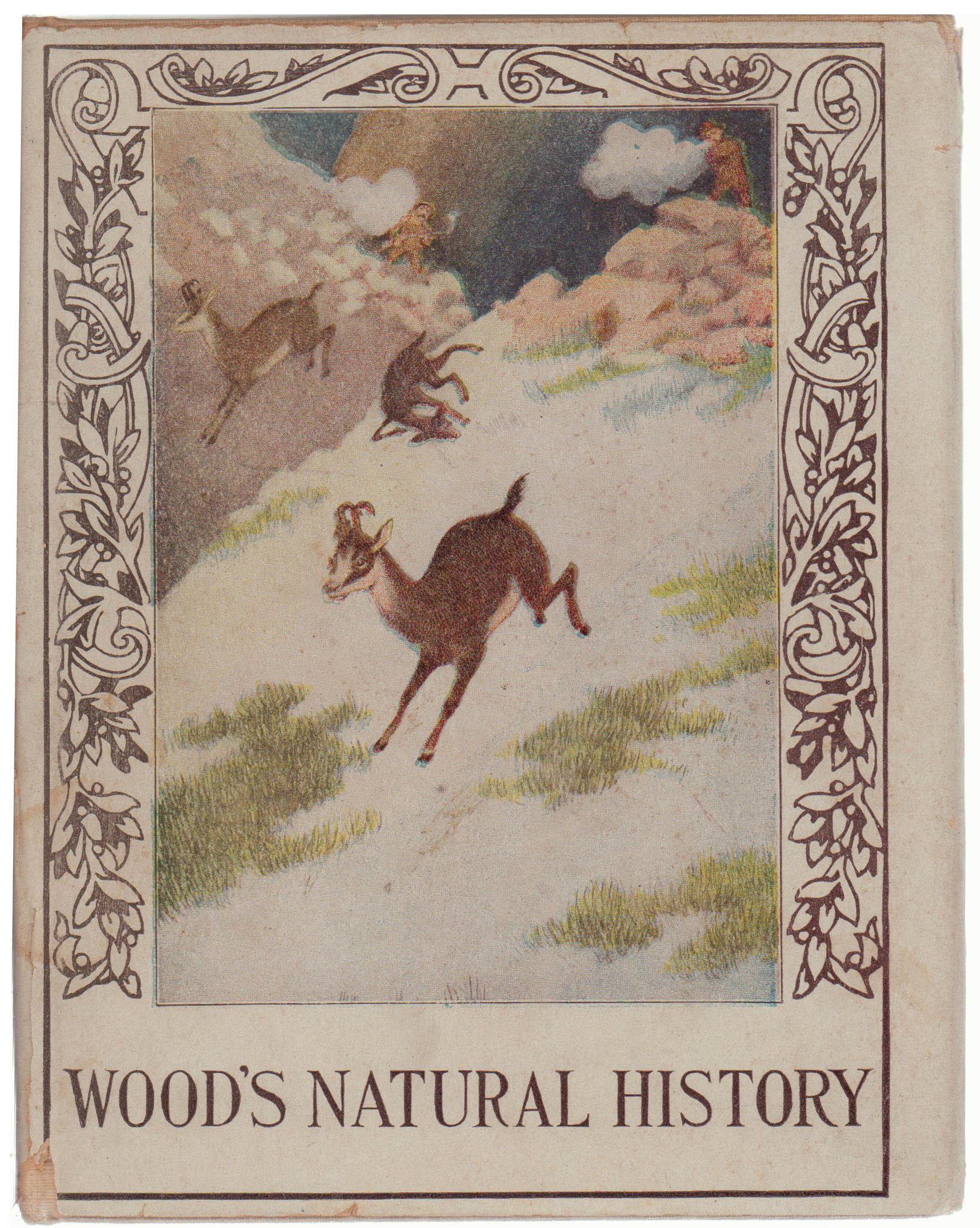 Wood S Natural History Book Chairish