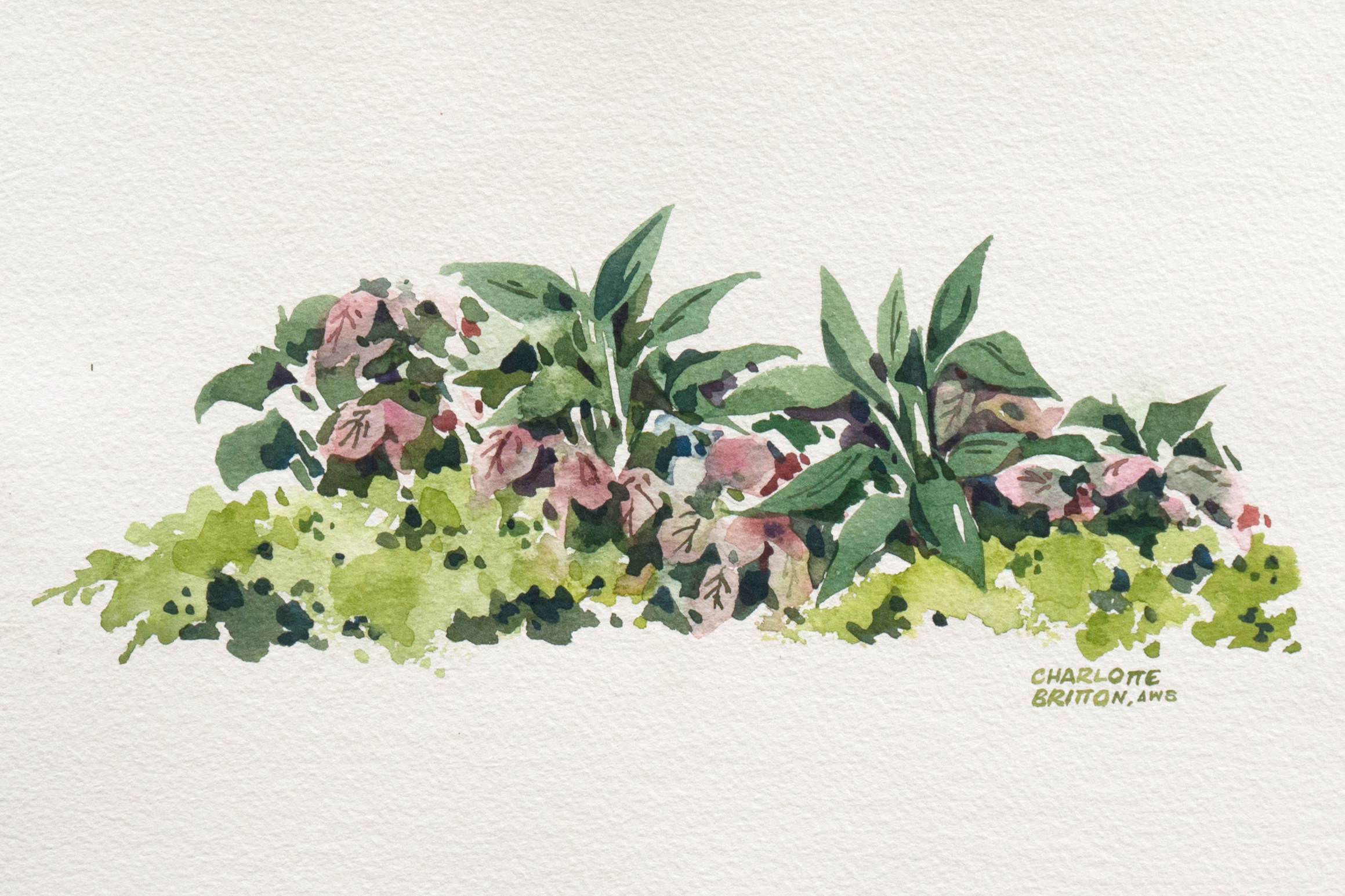 Charlotte Britton Aws Herbaceous Plants Watercolor Chairish