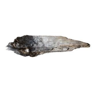 Fallen Driftwood