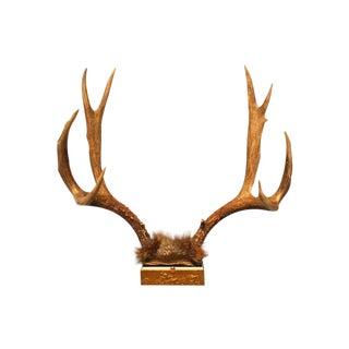 Vintage Deer Antlers