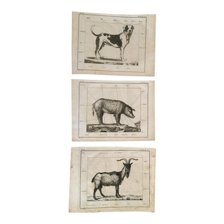 Antique Dog Pig & Goat Framable Prints - Set of 3