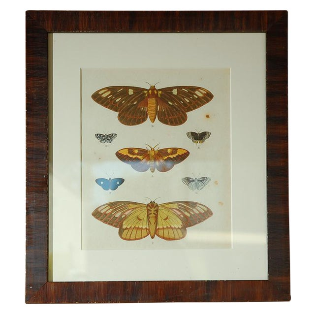 Antique Butterfly Prints Set of Eight - Image 1 of 10