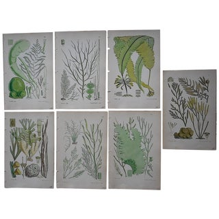 "7 Antique Seaweed Lithos Green 4.75""x7.5"""