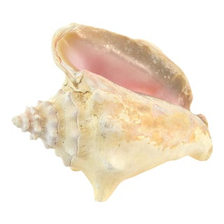 Natural Conch Seashell