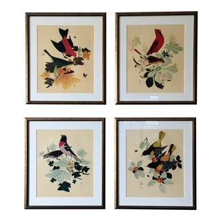 Vintage Framed Bird Prints - Set of 4