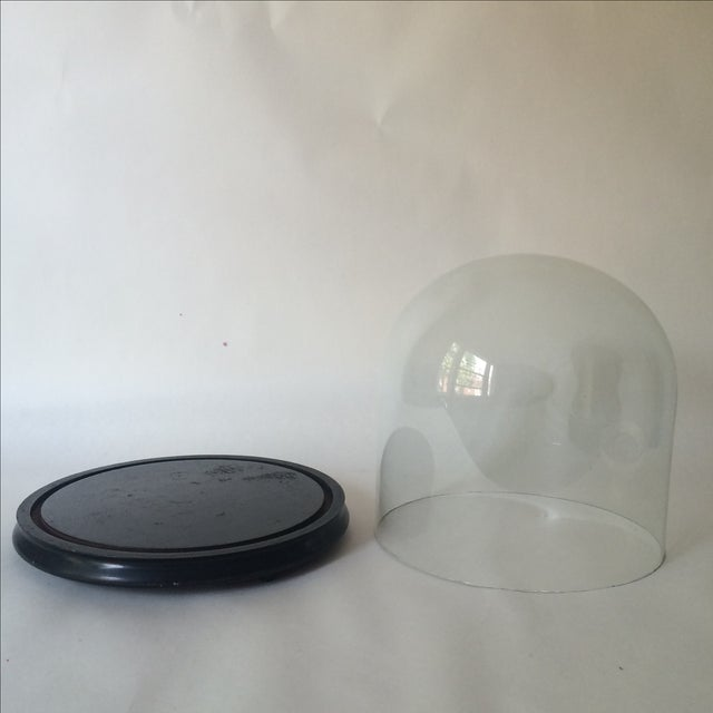 Victorian Cloche Dome with Stand - Image 4 of 8