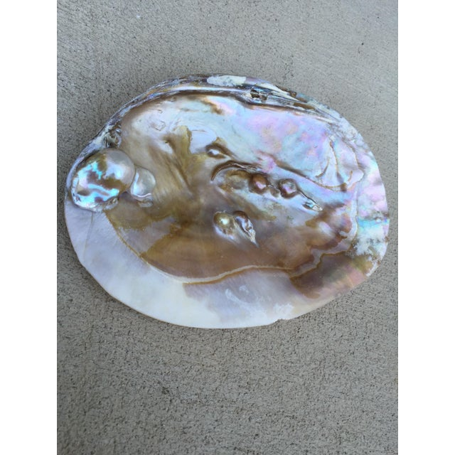 Natural Shell Tray With Baroque Pearl - Image 3 of 11