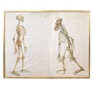Rare Evolution Poster