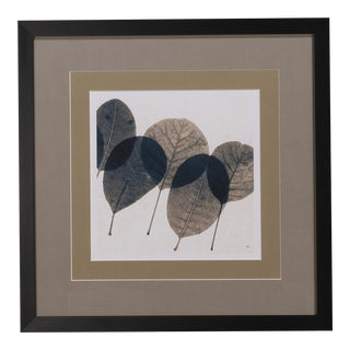 Sarreid LTD Transparent Leaf Giclee Print