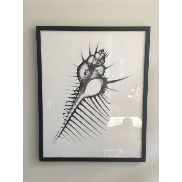 Image of George Green X Ray Print