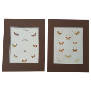 19th-Century French Butterfly Prints - A Pair