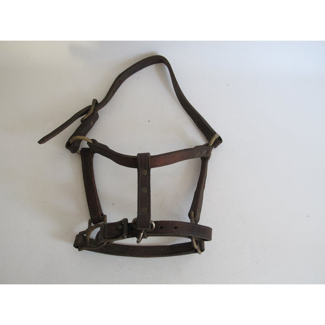 British Leather & Brass Pony Halter - Image 5 of 6