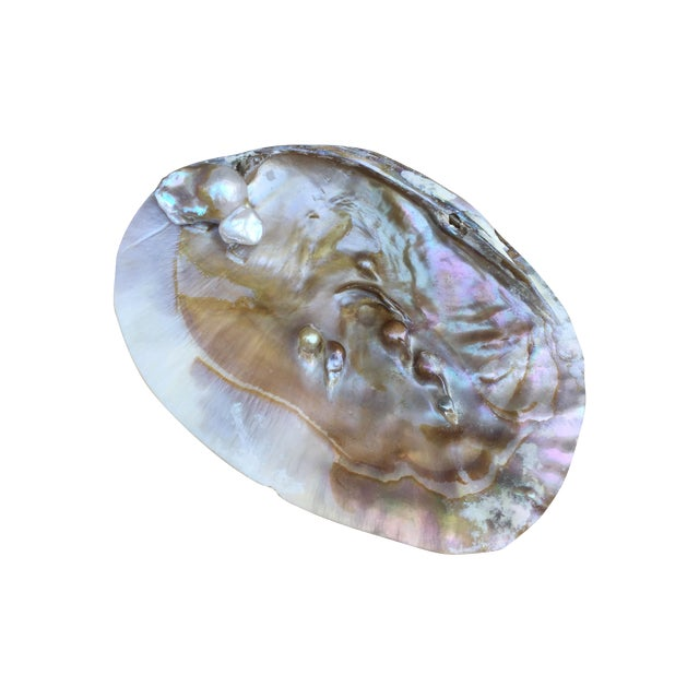 Natural Shell Tray With Baroque Pearl - Image 1 of 11