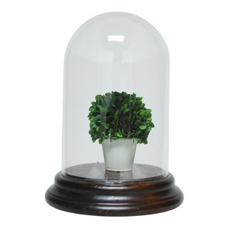 Large Glass Cloche Dome Bell Jar with Mahogany Base