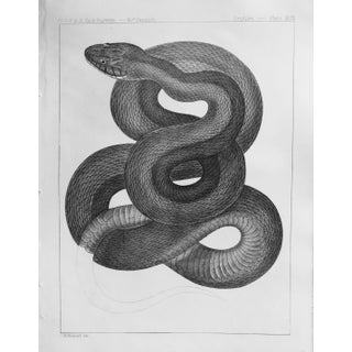 Western Black Snake Antique Lithograph c.1860