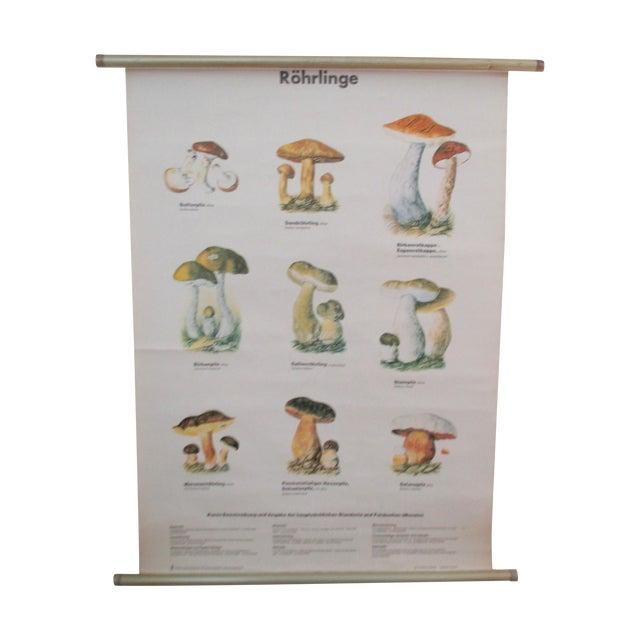 Antique German School Chart of Mushrooms - Image 1 of 9