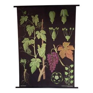 Jung-Koch-Quentell Botanical Science Chart 1970's