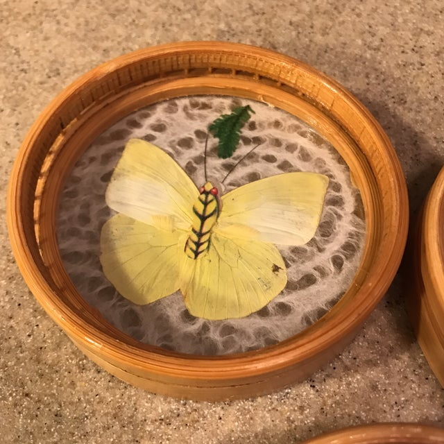 Butterfly Specimen Tray & Coaster Set - Image 10 of 11