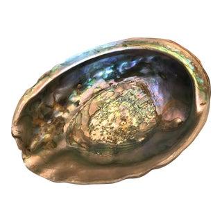 Vintage Large Abalone Shell