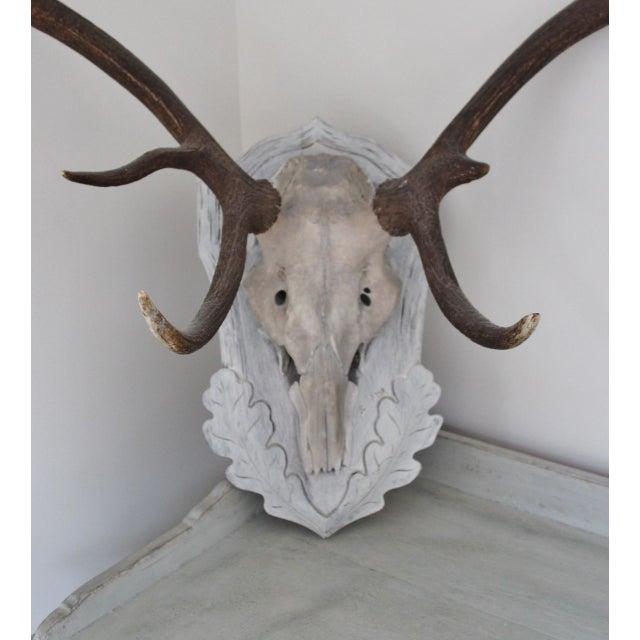 Image of Large Vintage Elk Antlers Mounted on Wooden Plaque