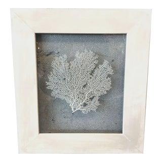 Framed Sea Fan Coral