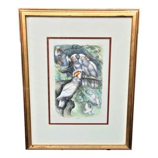 Vintage Framed Italian Cockatoo Bird Print