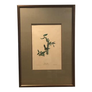 R. Havell Audubon Engraving