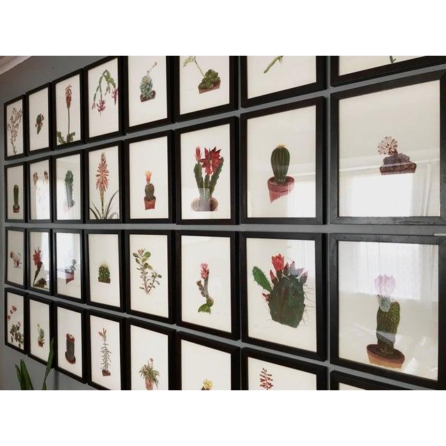 Framed Rock Plants - Set of 32 - Image 4 of 11
