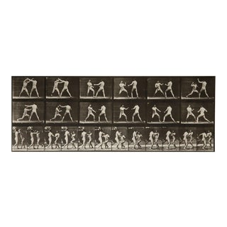 Eadweard Muybridge Animal Locomotion Plate 329