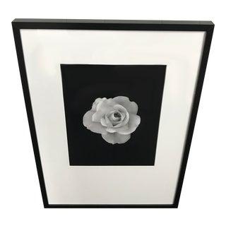 Framed Photograph of Rose in Bloom