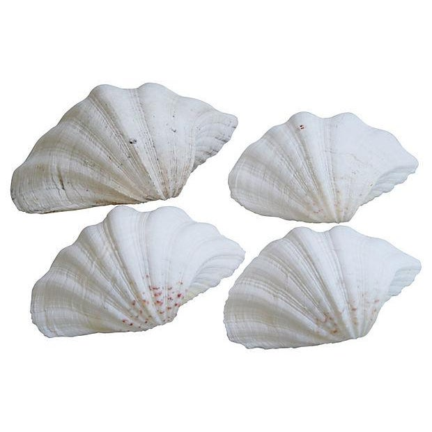 Image of Vintage White Natural Clamshells - Set of 4