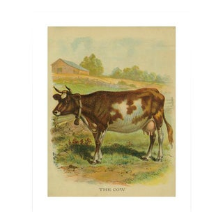 Vintage 'The Cow' Archival Print