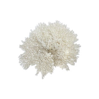 Natural Table Coral Specimen