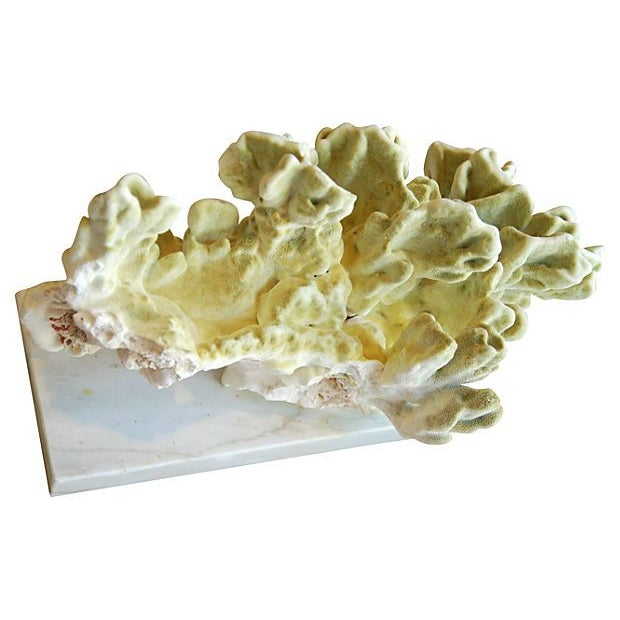 Natural Green Fire Coral on White Marble Slab - Image 4 of 7