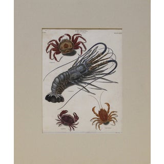 Blue Lobster With Crabs Engraving