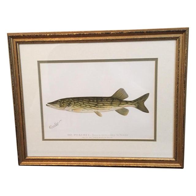 Antique Framed Fish Print - Image 1 of 4