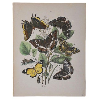 Antique Chromolithograph Butterflies/Moths