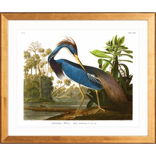 "Audubon ""Louisiana Blue Heron"" Birds of America Gold Framed Print"