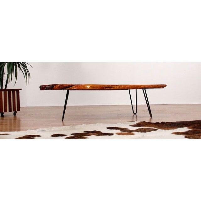 Vintage Wood Slab Coffee Table: Vintage Wood Slab Coffee Table With Coral Reef