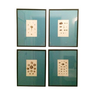 Shell Lithographs - Set of 4