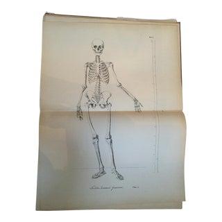 Anatomy Study Print From Lehre Von Den Knochen Und Muskeln Book