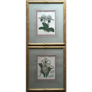 Pair Orchid Prints-Custom Framed - Fitch