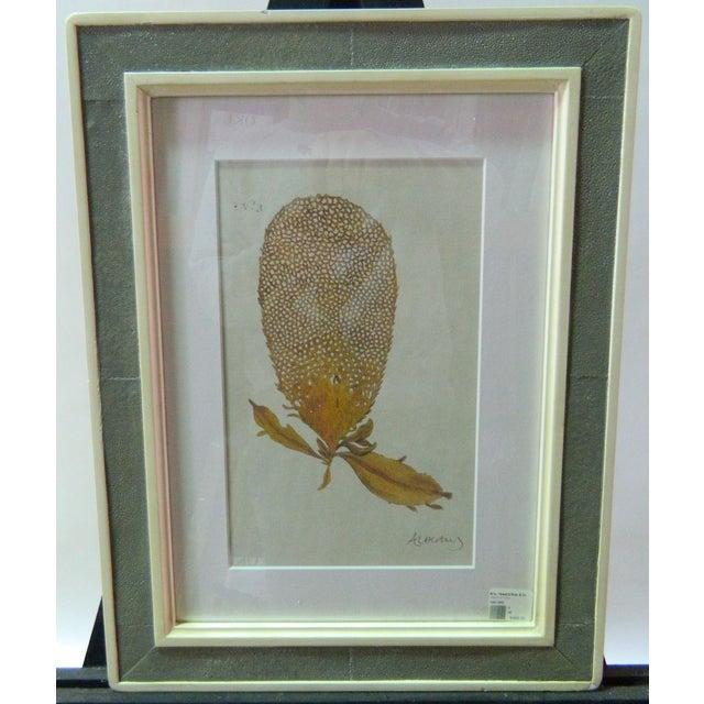 Image of Albertus Coral Reproduction Print
