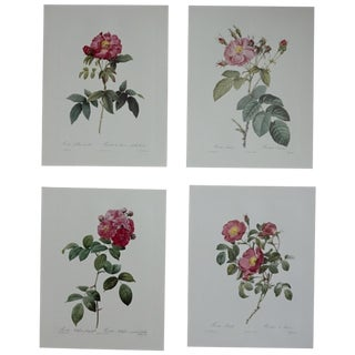 Pink Botanical Prints - Set of 4