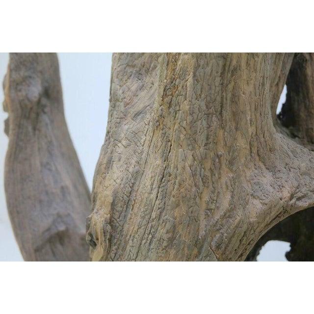 Drift Wood Sculpture - Image 6 of 9
