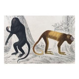 19th Century Goldsmith Howler Monkey Engraving